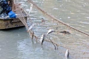 peces en la red