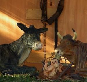 la mula y el buey
